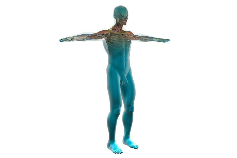 人体の構造