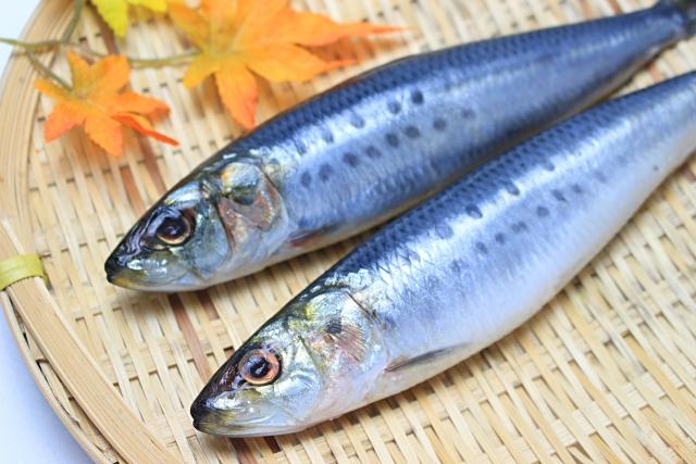 二尾の青魚